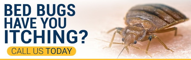 Call Phoenix Bed Bug Expert - 480-351-0375