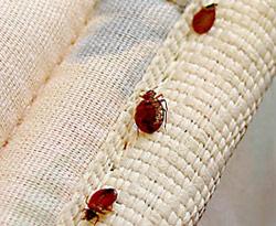 Phoenix Bed Bug Treatment